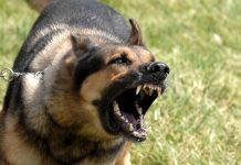 Kinh nghiệm khi bị chó dữ tấn công