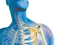 Vai trò của canxi đối với xương và cơ